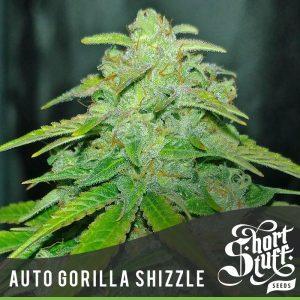 auto gorilla shizzle