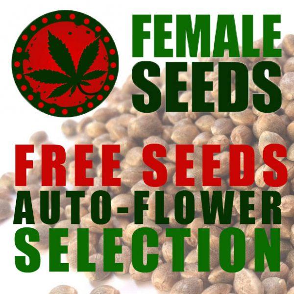 Free Gift - Autoflowering selection