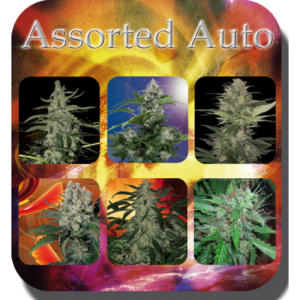 Buddha Seeds Assorted Auto female Mix