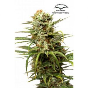 Dutch Passion Auto White Widow female Seeds