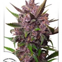 Dutch Passion Auto Blackberry Kush female Seeds