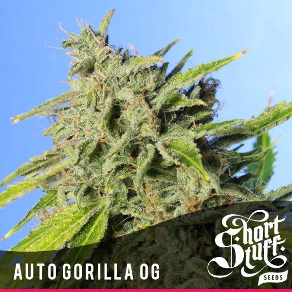 Shortstuff seeds Auto Gorilla OG female