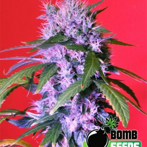 Bomb Seeds Berry Bomb
