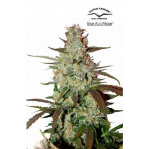 Dutch Passion Blue AutoMazar female Seeds