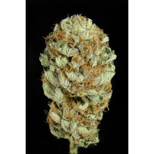Dinafem Blue Kush female Seeds