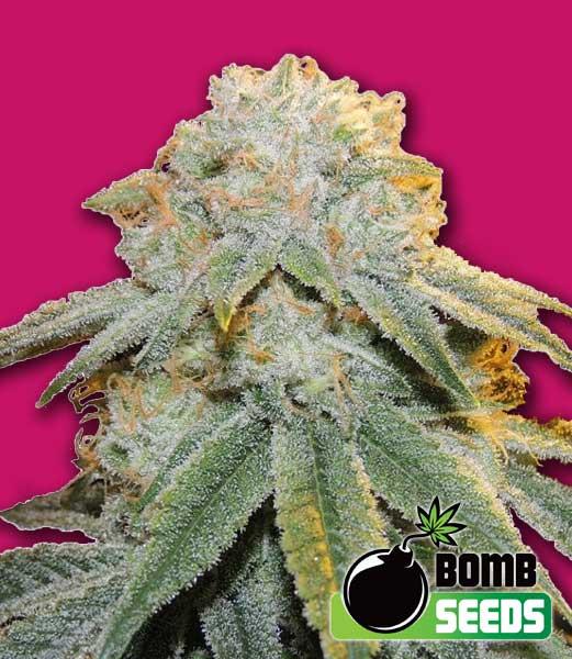 Bomb Seeds Bubble Bomb