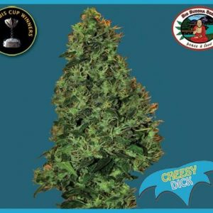 Big Buddha Seeds Cheesy Dick female Seeds