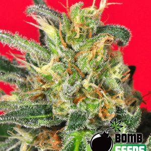 Bomb Seeds Cluster Bomb