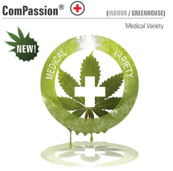 Dutch Passion ComPassion female Seeds