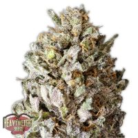 Heavyweight Seeds Diesel Drift female seeds