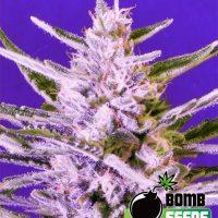 Bomb Seeds Ice Bomb
