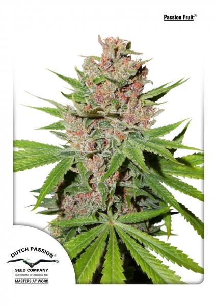 Dutch Passion Passion Fruit female Seeds