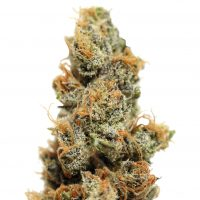 Barney's Farm Pineapple Chunk female Seeds