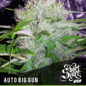 shortstuff seeds Auto Big Gun female