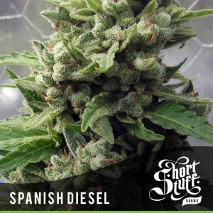shortstuff seeds Auto Spanish Diesel female
