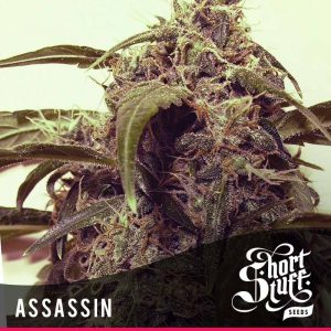 shortstuff seeds Assassin female