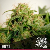 shortstuff seeds Onyx female