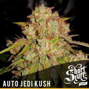 Shortstuff seeds Auto Jedi Kush female