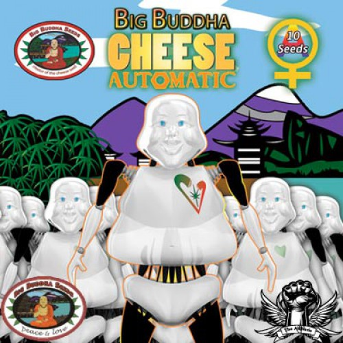 Big Buddha Seeds Cheese AUTO female Seeds