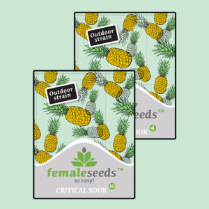 Female seeds company Critical Sour female seeds