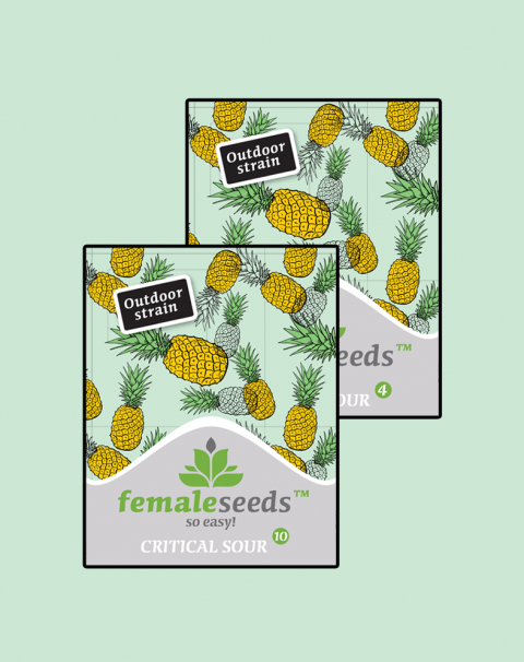 Female seeds company Critical Sour female seeds