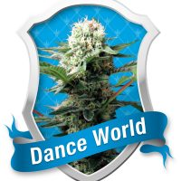 Royal Queen Seeds Dance World female Seeds
