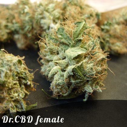 Discount Female Seeds Dr. CBD female seeds