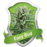 Royal Queen Seeds Easy Bud Automatic female Seeds