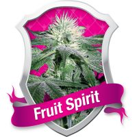Royal Queen Seeds Fruit Spirit female Seeds