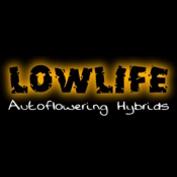Lowlife Seeds