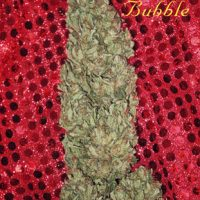 Mandala seeds Hubble Bubble female