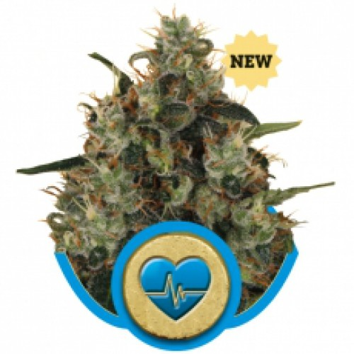 Royal Queen Seeds Medical Mass female Seeds