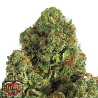 Heavyweight Seeds Midnight Mass female Seeds