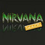 Nirvana Seeds