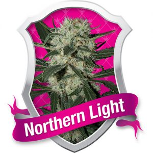 Royal Queen Seeds Northern Light female Seeds