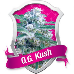 Royal Queen Seeds O.G. Kush female Seeds