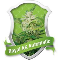 Royal Queen Seeds Royal AK Automatic female Seeds