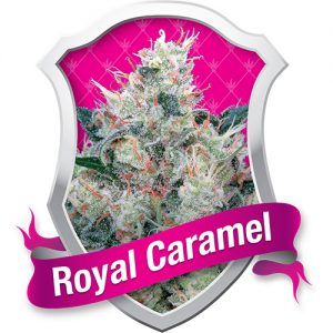 Royal Queen Seeds Royal Honey Creamfemale Seeds