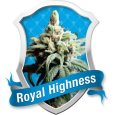 Royal Queen Seeds Royal Highness female Seeds