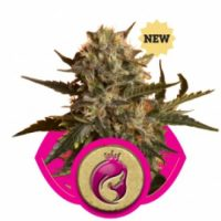 Royal Queen Seeds Royal Madre female Seeds