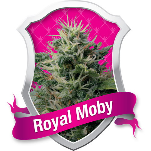 Royal Queen Seeds Royal Moby female Seeds