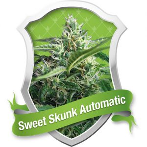 Royal Queen Seeds Sweet Skunk Automatic female Seeds