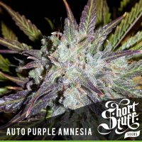 shortstuff seeds Auto purple amnesia female