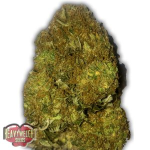 Heavyweight Seeds Auto Skunky Monkey female Seeds