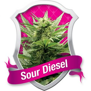 Royal Queen Seeds Sour Diesel female Seeds