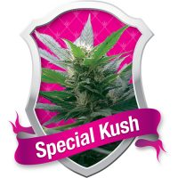 Royal Queen Seeds Special Kush #1 female Seeds