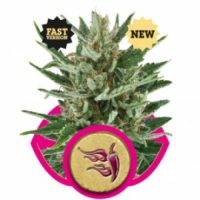 Royal Queen Seeds Speedy Chile FAST VERSION female Seeds