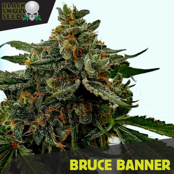 Blackskull Bruce Banner Feminized seeds