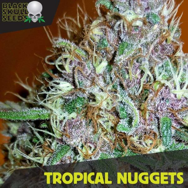 Blackskull Tropical Nuggets Feminized seeds